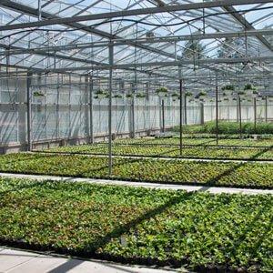 Pflanzenzucht, Gärtnerei Weißer, Floraparadies, Schabenhausen