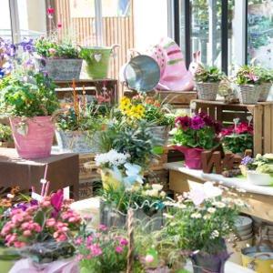 Floristik, Topfpflanzen und Deko für Ihren Garten bei Gärtnerei Weißer's Floraparadies