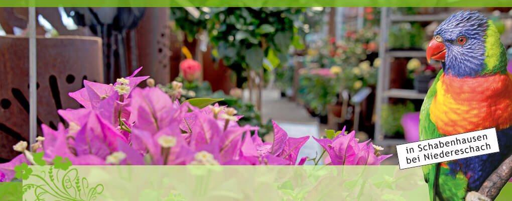pflanzen f r beet und balkon g rtnerei weissers floraparadies. Black Bedroom Furniture Sets. Home Design Ideas
