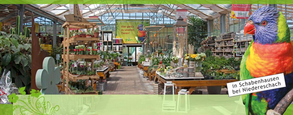 Meistgekaufte zimmerpflanzen g rtnerei weissers - Zimmerpflanzen liste ...